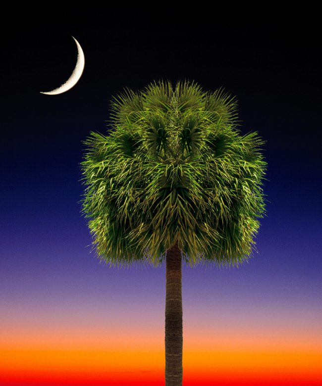 Palmetto Tree flag artwork. South Carolina