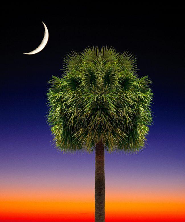 Palmetto Tree flag artwork. South Carolina